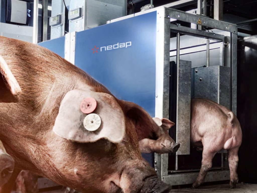 Thumbnail Nedap Feeding Systems AHC Cawi International Pigs Equipment